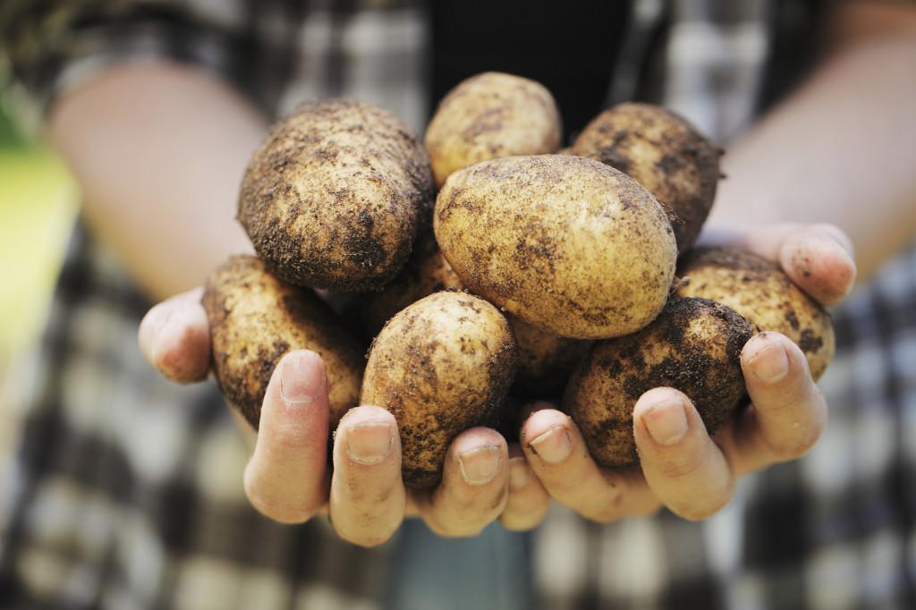 Проращиваю семена картофеля в пластиковой бутылке
