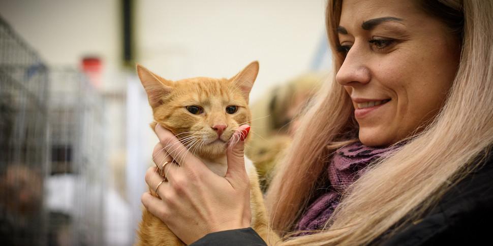 Ученые: кошки любят людей больше, чем еду