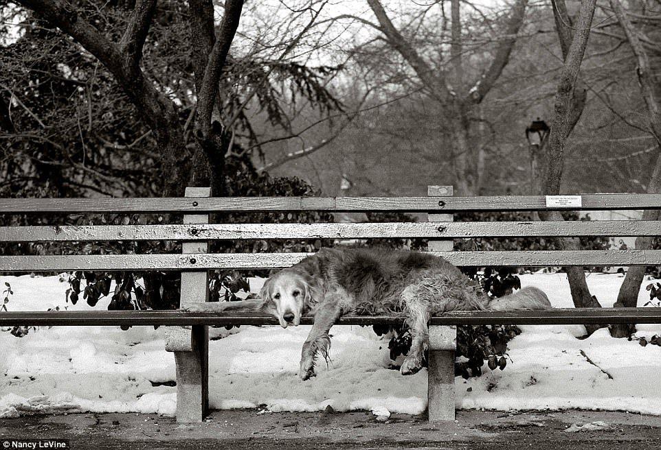 Старые собаки