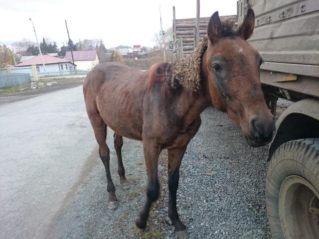 На Урале в центре города жители нашли бездомного коня