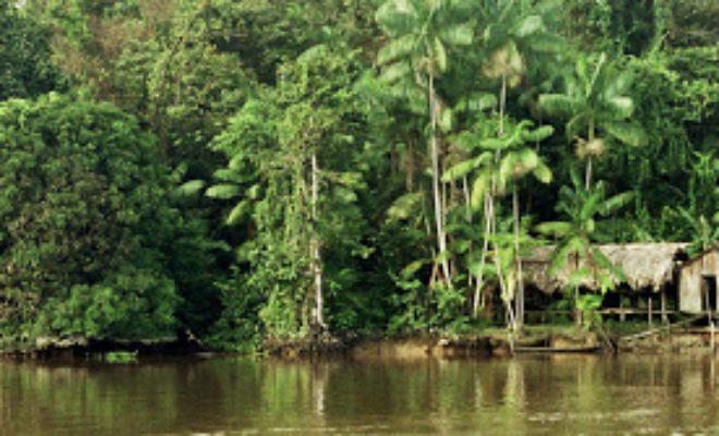 Плавающий лес Амазонки: острова в глубине джунглей