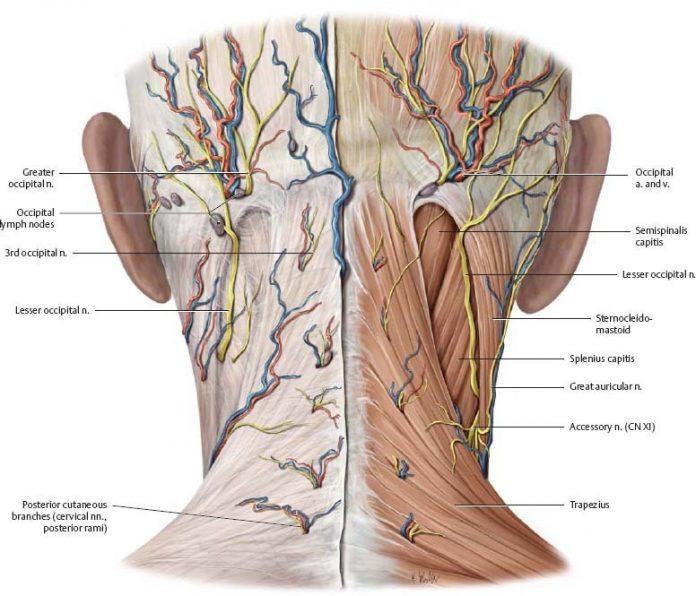 Разгрузка и освобождение отдельных частей тела: Затылок