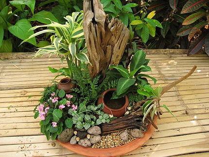 Как  сделать мини сад в плошке
