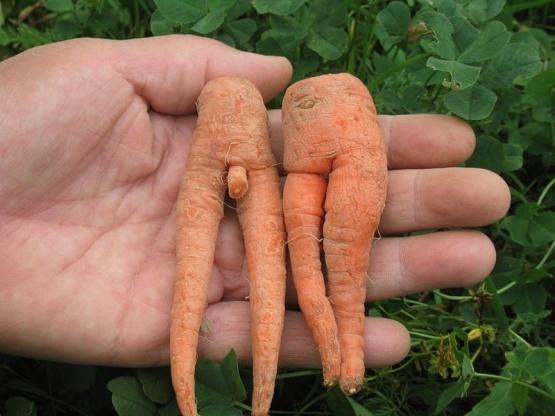 Неприличная морковка. Фото взято с сайта zaycev.fm, автор red_devil