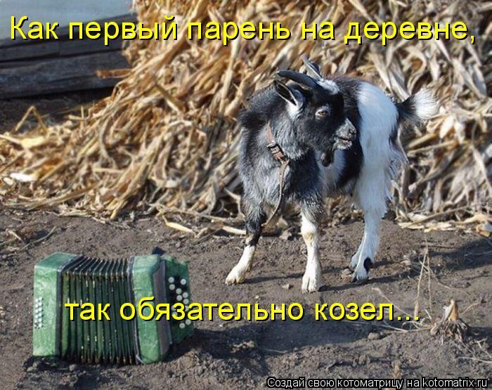 Котоматрица: Как первый парень на деревне,   так обязательно козел…..