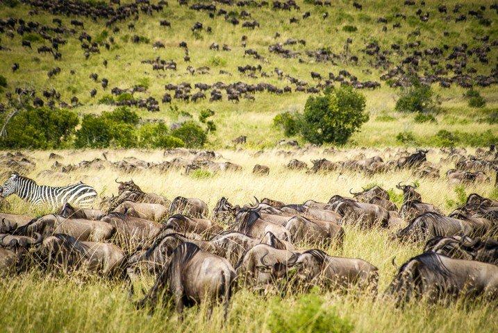 За 50 лет популяция дикой природы на Земле сократилась на две трети