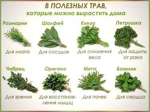 Если не будешь есть еду как лекарство, то будешь есть лекарство как еду!