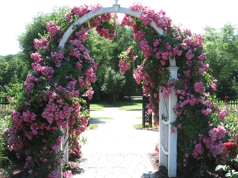 Цветочные арки своими руками фото 11