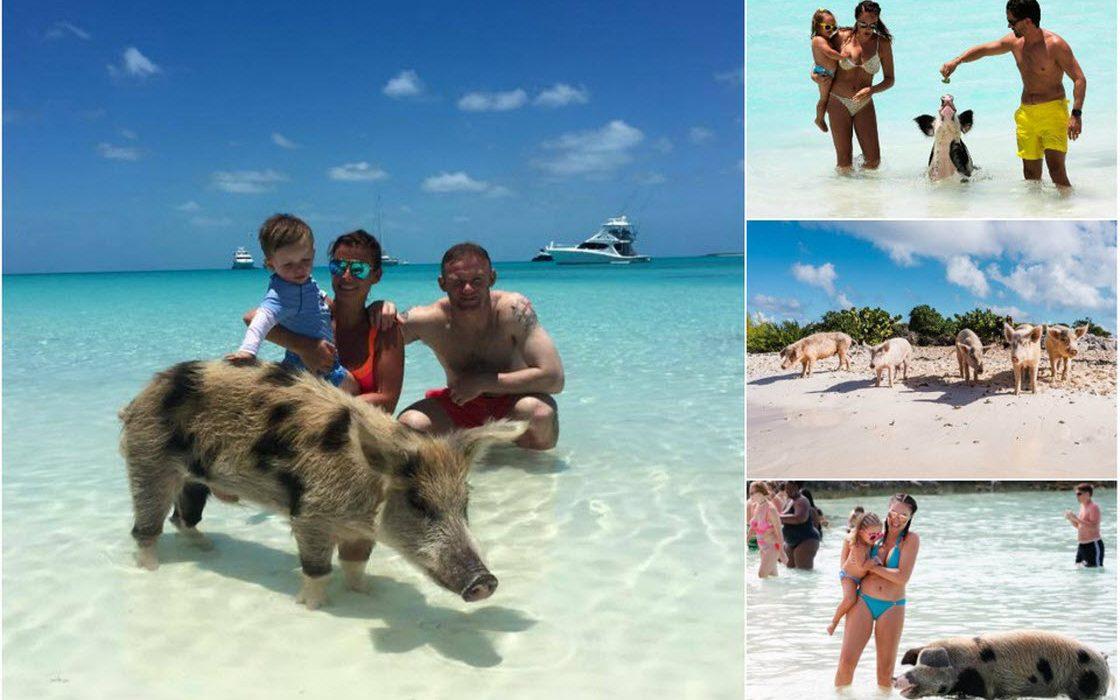 Знаменитые свиньи с Багамски…