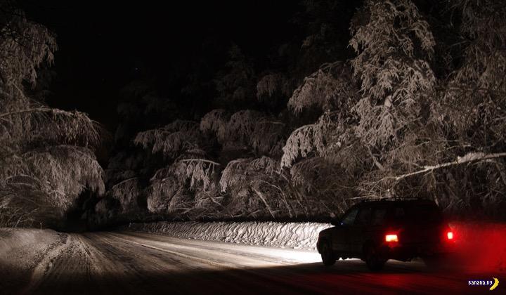 Зимний лес вместо дискотеки