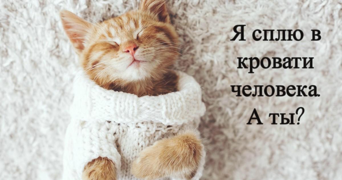 «Скажи НЕТ холодной подстилке!» Как отвоевать постель человека? Практические советы рыжего кота)
