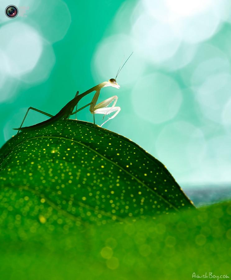 aimishboy 029 Удивительная макрофотография: неожиданно гламурные насекомые и многое другое
