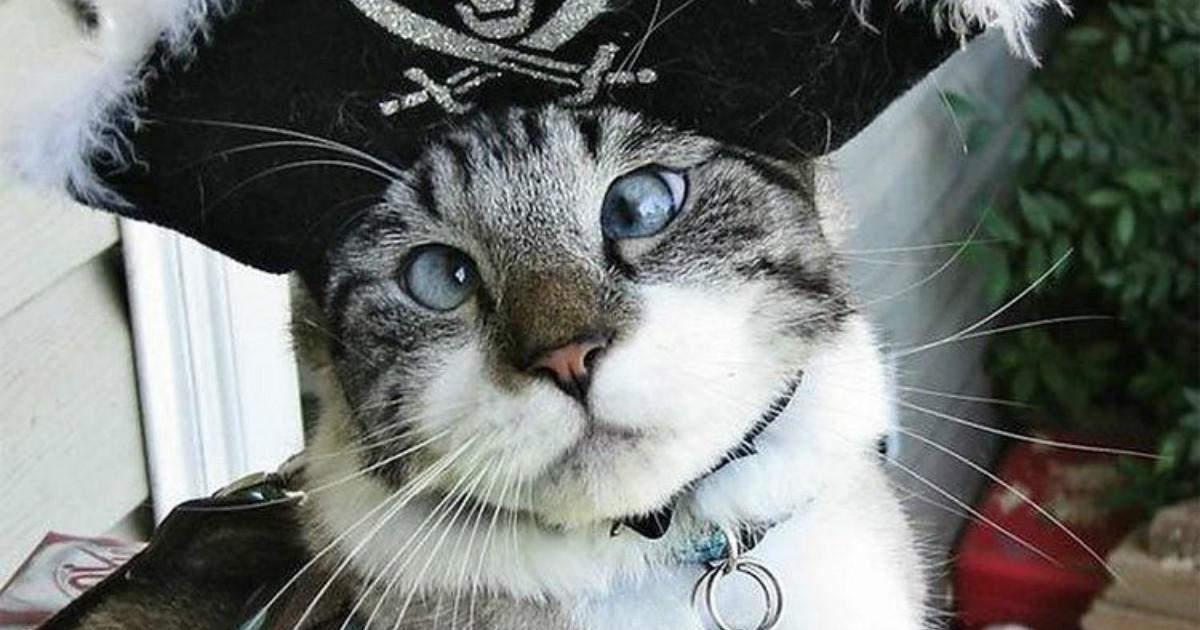 Красота в глазах смотрящего! 20 очаровательных котиков, которых никак не портит косоглазие)