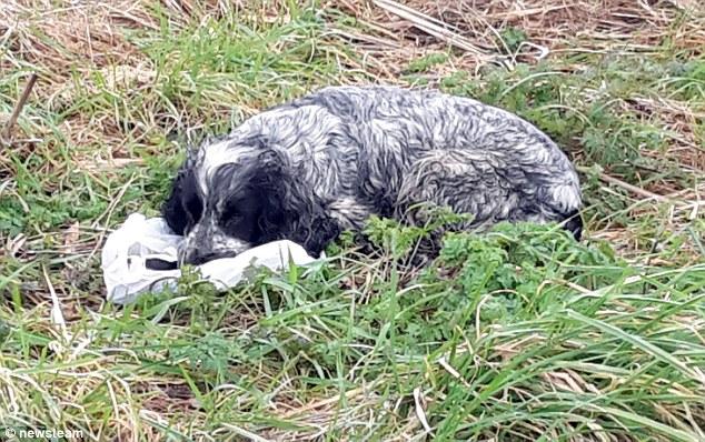 Он нашел в канаве брошенную собаку с пакетом в зубах...