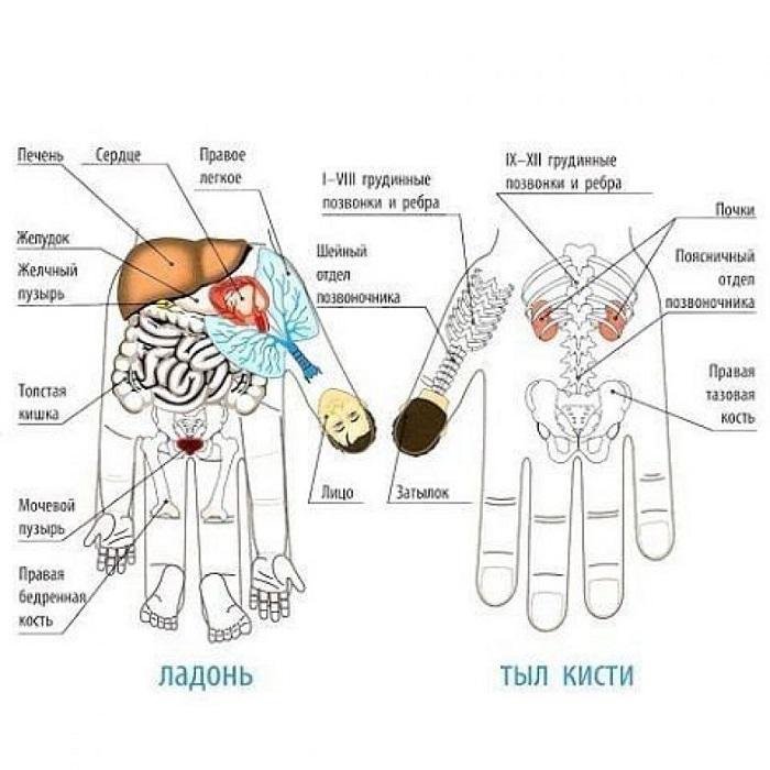 Каждый палец отвечает за 2 определенных органа нашего тела. Массируйте пальцы и избавляйтесь от боли!