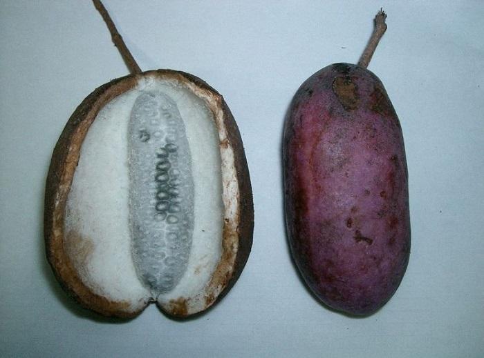 10 фруктов, которые заставят тебя покраснеть! Фантастика, растущая на деревьях