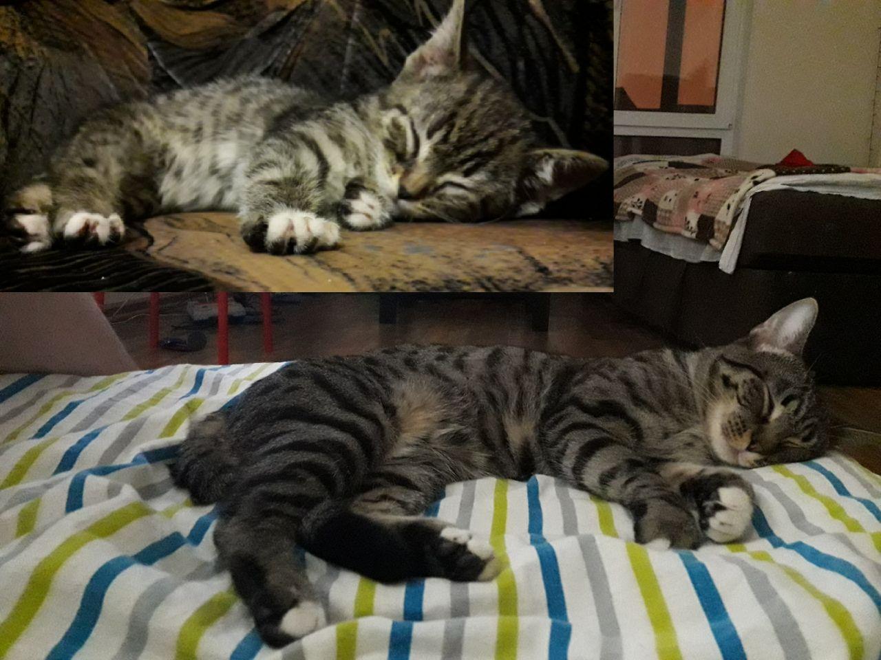 С котом в доме теплее и веселее