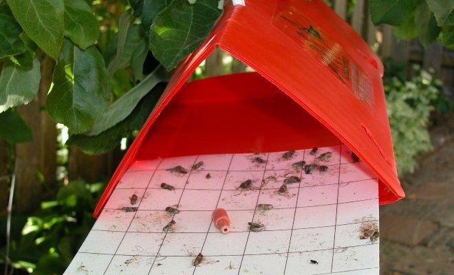 Феромонные ловушки – что это такое и как ими пользоваться