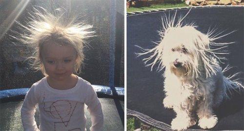 """""""Теперь ты собака"""": забавный аккаунт в Twitter, который найдёт вам двойника среди собак (26 фото)"""