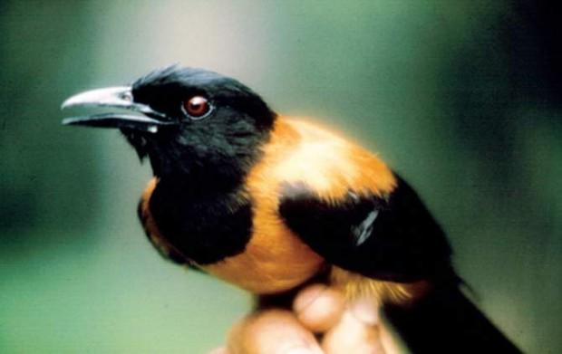 Интересные факты о самых ядовитых животных в мире