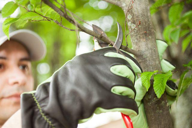 Что нужно знать про обрезку сада: инструменты, технологии, сроки. Часть 1