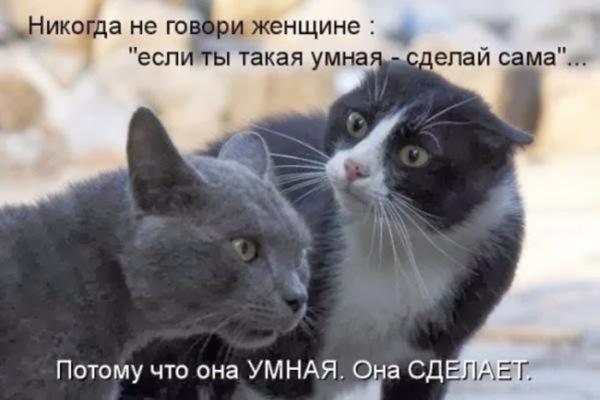 Подборка симпатичных и интересных котоматриц))