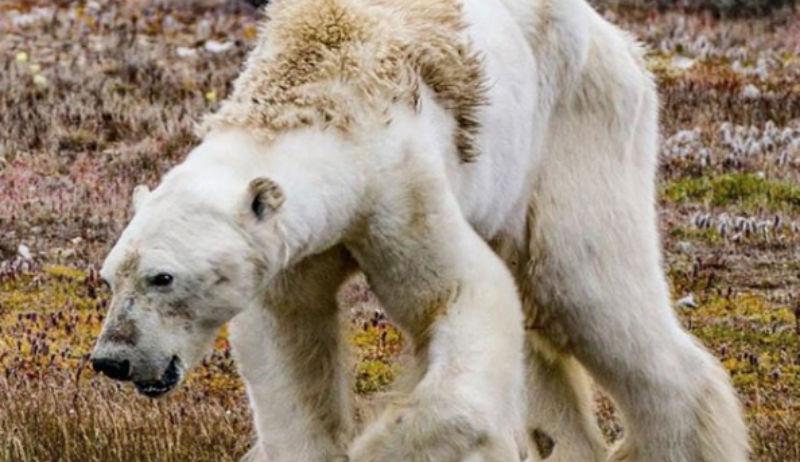 Самые популярные фотографии в инстаграме National Geographic за 2017 год