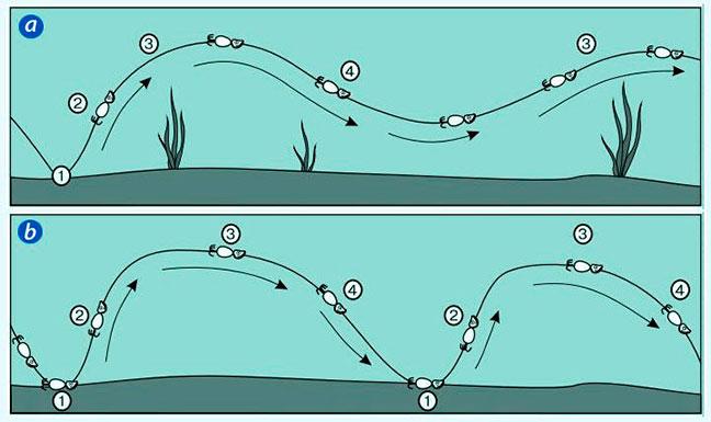джиговые проводки при ловле щуки