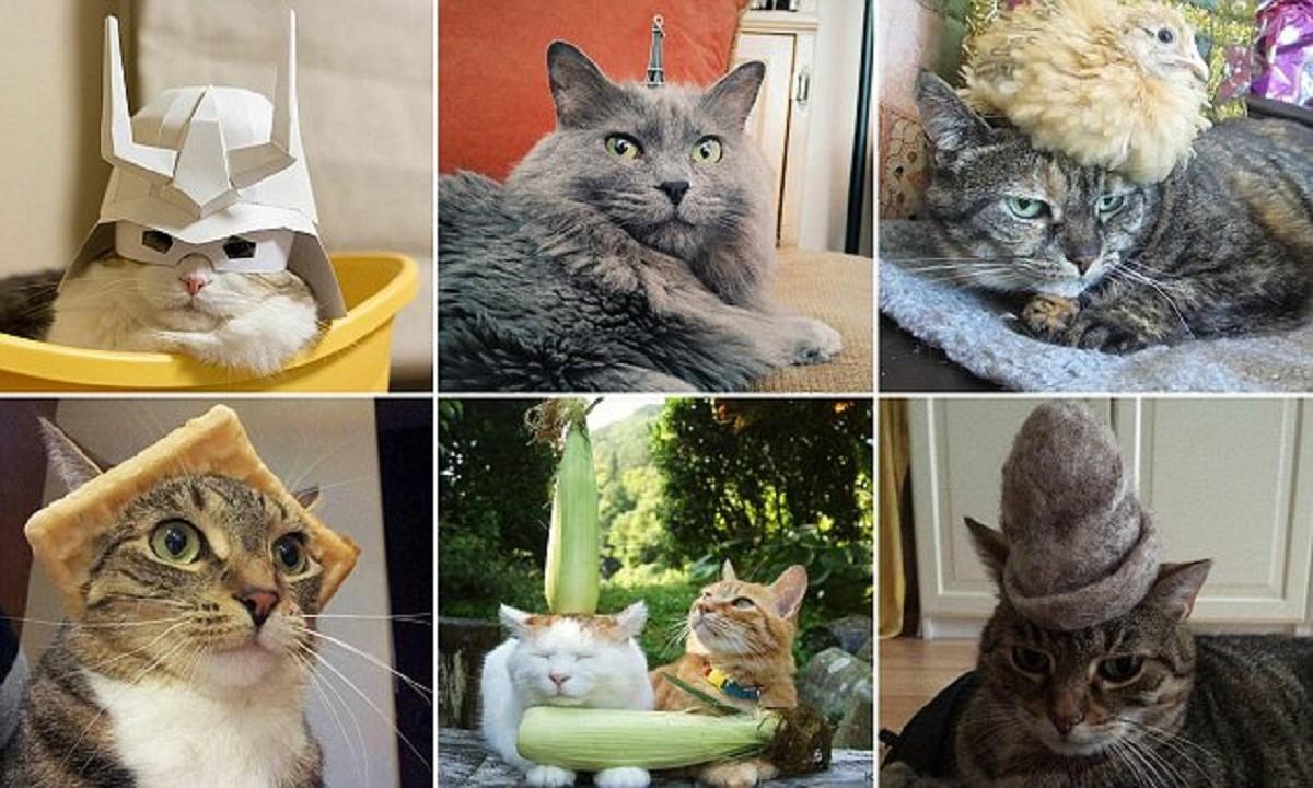 Смешные коты в шляпах