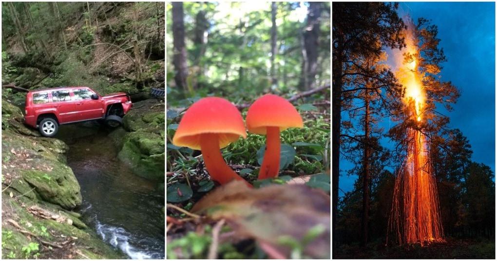 Странные находки, на которые люди натыкались в лесу