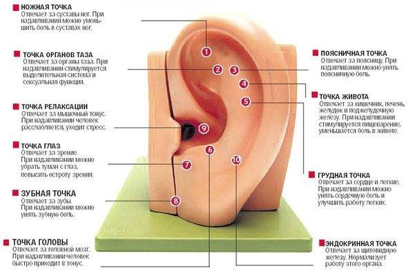 О чем могут рассказать уши