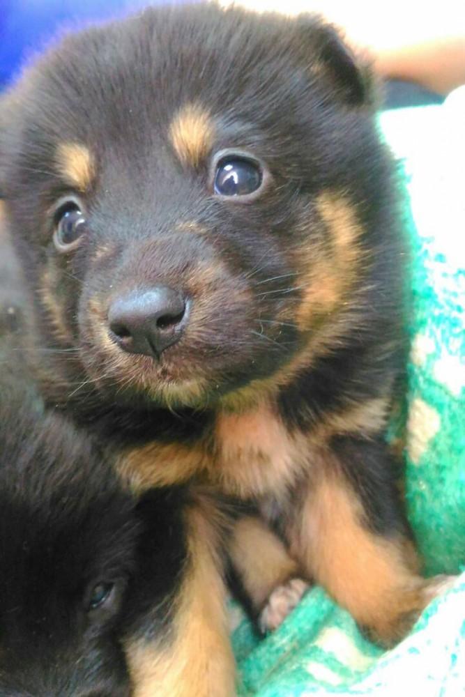 В Хабаровске девушка спасла четырёх щенков, повешенных на дереве