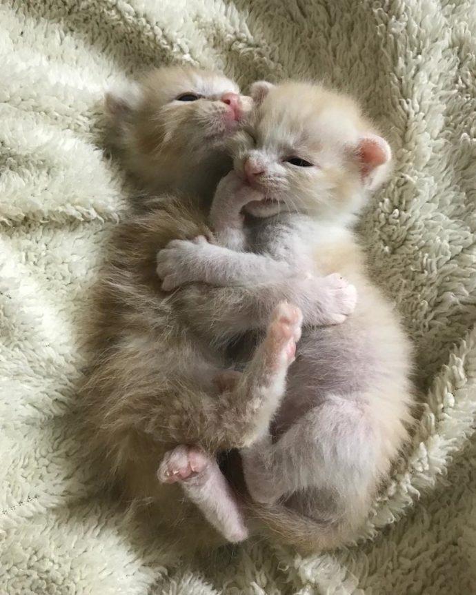 Ради спасения двух кото-малышей полосатый кот стал заботливым воспитателем