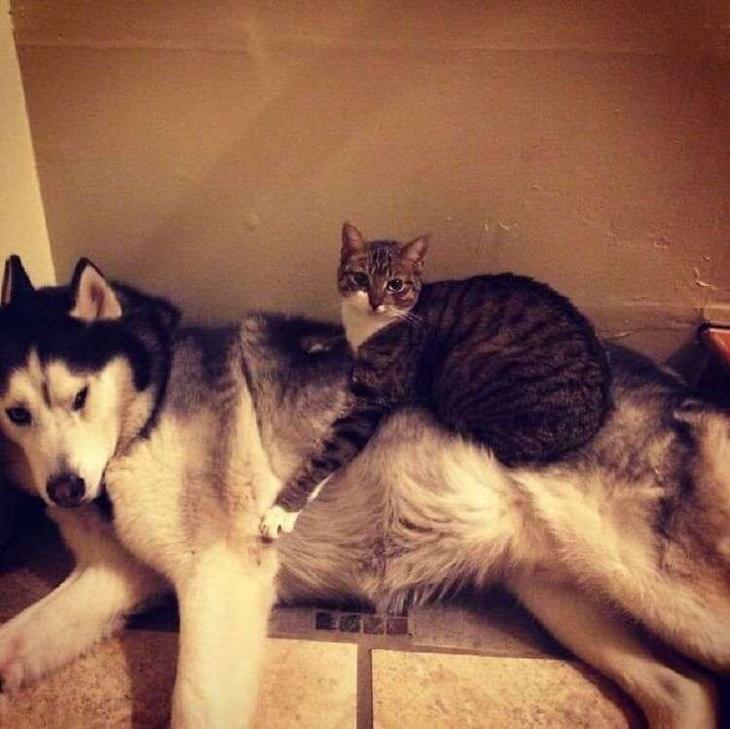 Кошки, которые настолько обн…