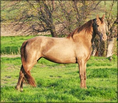 Фото лошади соболиной масти