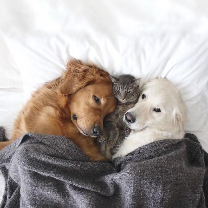 Кот и две собаки, которые живут душа в душу, как одно целое