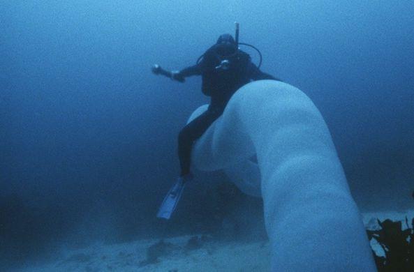 Дайвер заснял огромного «морского червя»