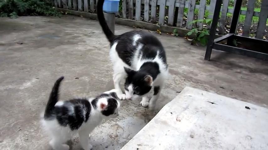 Кошка вывела на прогулку своего котёнка