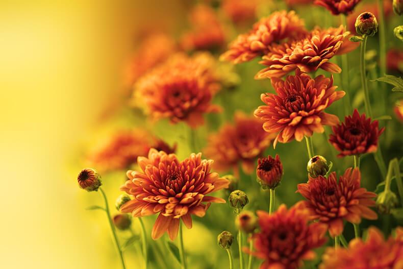 Самые неприхотливые растения, которые очищают воздух