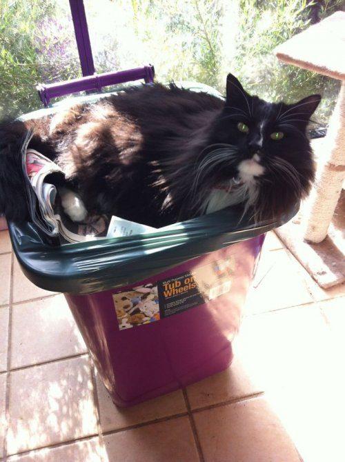 Эти странные кошки