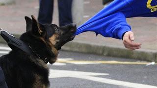 Как обезопасить себя от агрессивных бродячих собак