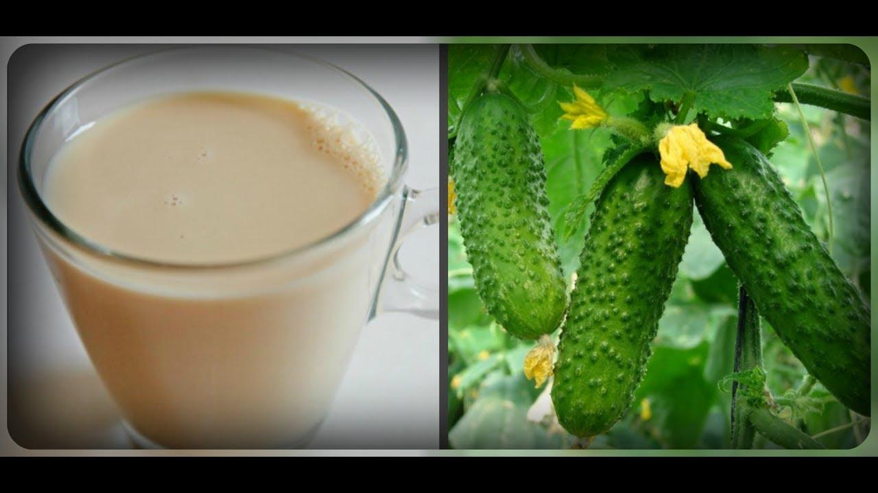 Image result for Молоко в огороде
