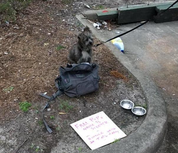 «Свободен. Мой хозяин сегодня сел в тюрьму» - история собаки, привязанной к контейнеру