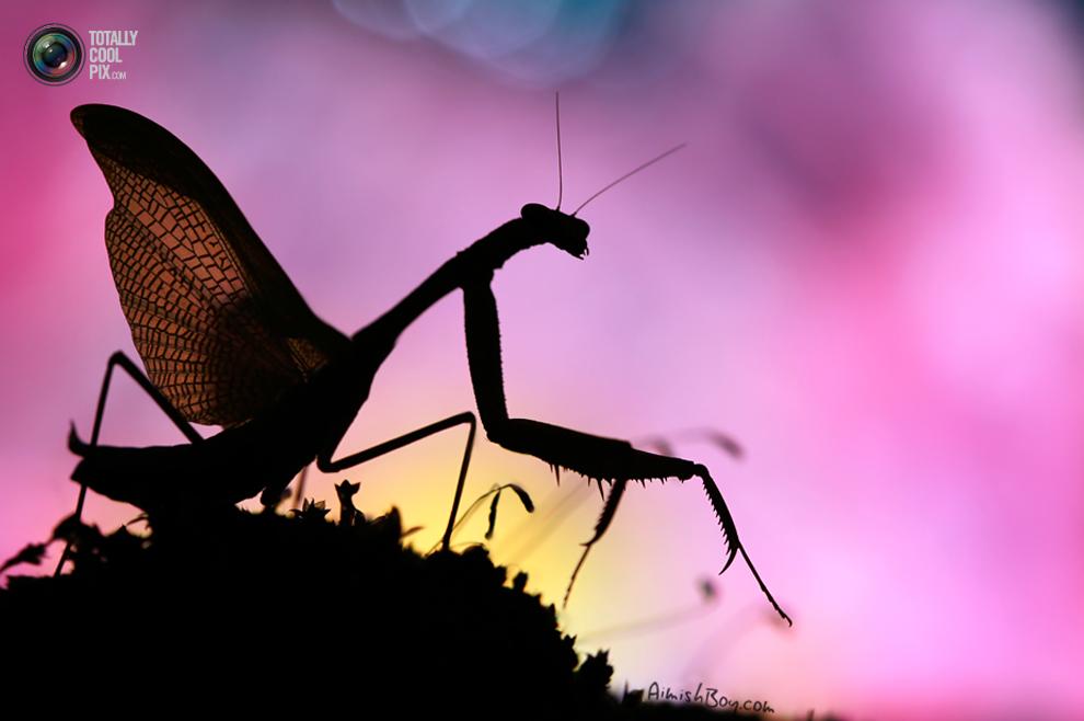 aimishboy 037 Удивительная макрофотография: неожиданно гламурные насекомые и многое другое