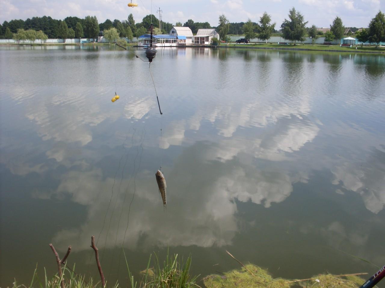 платные озера в брянске для рыбалки