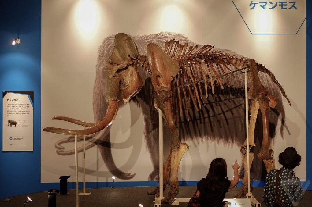 Yuka11 Самый известный мамонт из Якутии: Юка