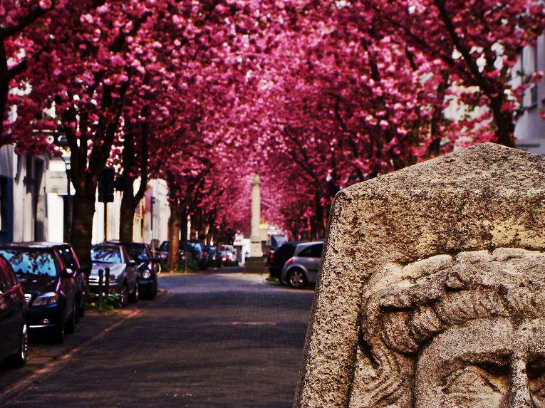 Улица в городе Бонн, Германия