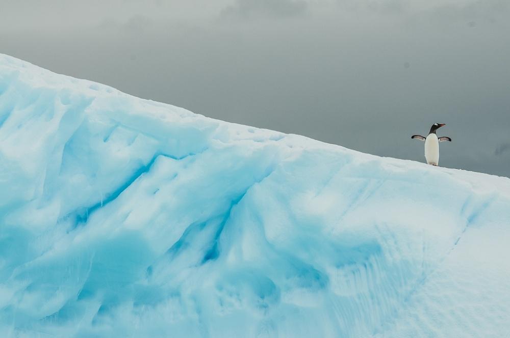 Антарктида. Синий лёд.