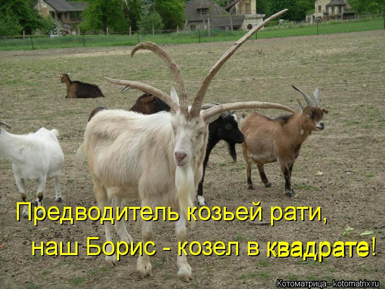 Котоматрица: Предводитель козьей рати,  наш Борис - козел в квадрате! квадрате