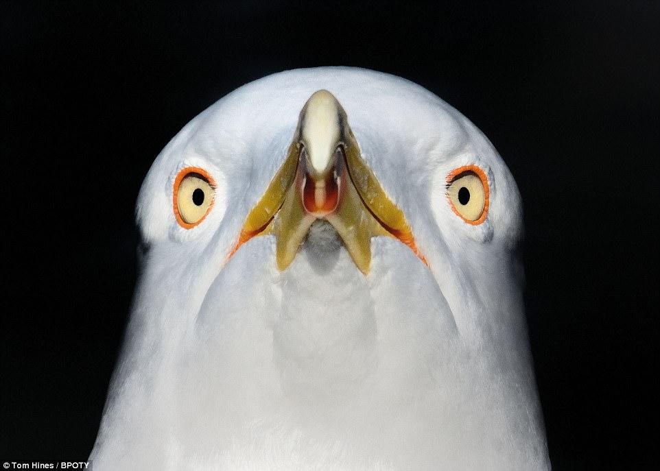 Объявлен победитель фотоконкурса Bird Photographer Of The Year